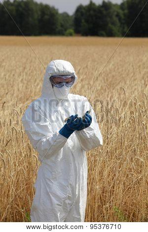biotechnology  engineer on field examining ripe ears of grain