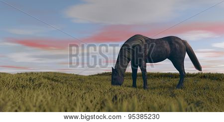 grazing horse on vast praire