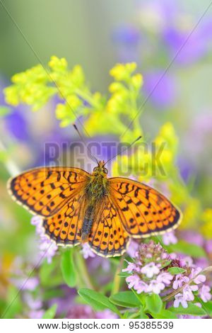 Monarch Butterfly in summer time