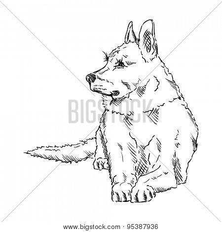 vector - German Shepherd - isolated on background