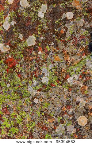 lichen moss in limestone rock texture in Spain forest