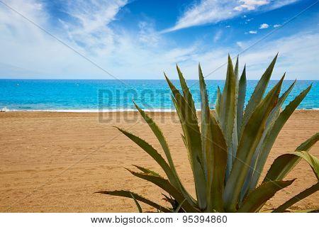 Almeria Mojacar beach Agave in Mediterranean sea of Spain