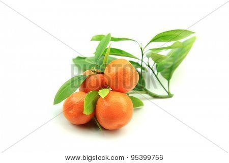 Citrus fruits Kumquats on white background