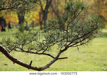 pine branch green Park nipple, pine branch green Park nipple