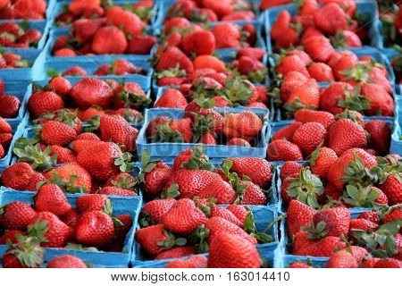 Blue pint containers filled with fresh picked strawberries at the local market.