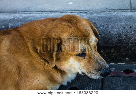 Gazing Dog