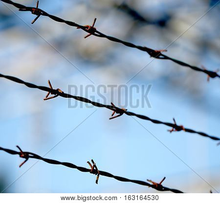 Three Barbed Wire Lines And Blurred Background