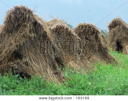 Haystacks 6