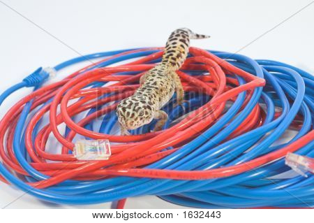 Lizard On A Cable