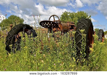 An old rusty tractor is left and forgotten in a patch of blooming thistles, grass,  and weeds