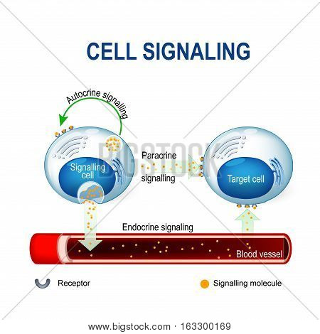 cell signaling. Signalling mechanism in cells: intracrine autocrine and endocrine signals.