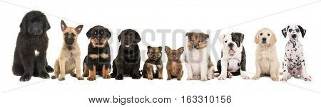 large group of ten different kind of breed puppies on a white background