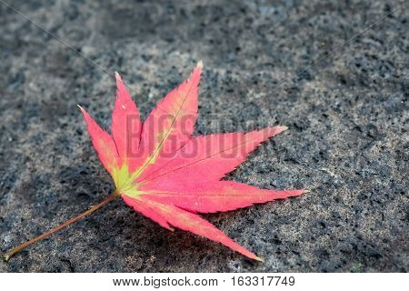 A single maple leaf fallen and landed on textured stone floor. High resolution image featuring strong vibrant and contrasting colors.