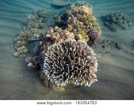 Underwater landscape with yellow fishes and sharp corals. Small coral reef in tropical sea. Exotic sealife with underwater animals. Natural ecosystem. Aquarium fishes in wild nature. Snorkeling photo