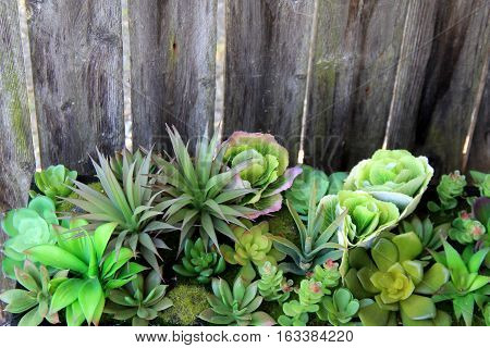Horizontal image of variety of succulents set against wood background