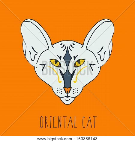 portrait, oriental, cat, head, breed, hand drawn , ink, pen, front view, orange, print, letter, handmade, exotic, thin, pattern, ornament, big, ears, calm, sleepy, phrase, sign, design, pattern