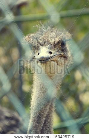 prison with ostrich An ostrich very curious and even vain