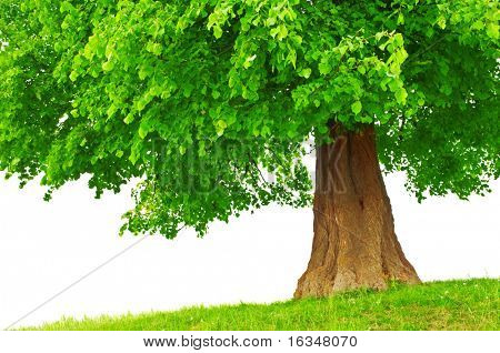 large green tree close up