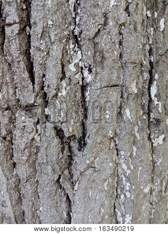 The bark of a tree with white paint close-up