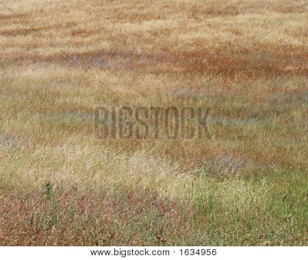 Multicolored Grasses Background