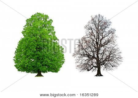 lush and nude tree isolated on white