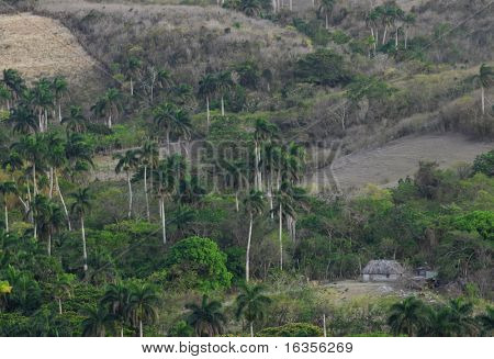 view of farm from largest bridge in cuba - province of matanzas