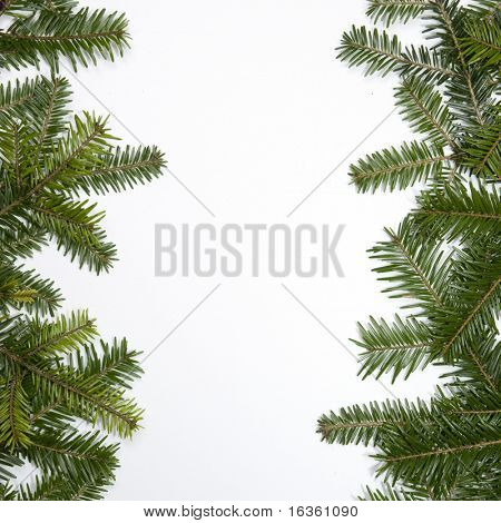 Fir frame with white background