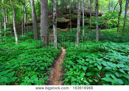 Hiking trail through the forest of Turkey Run State Park in Indiana.