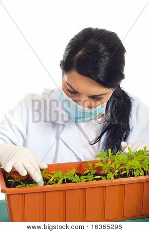 Agricultural Researcher Checking New Plants