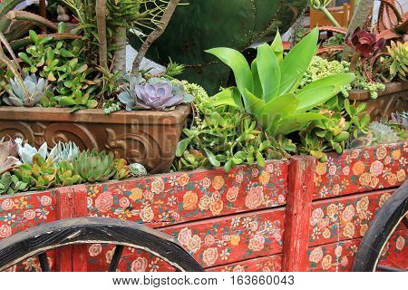 Colorful wagon used as a garden, filled with variety of succulent  plants.