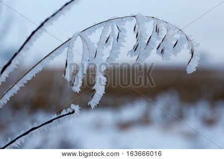 Grass and twigs covered with hoar frost.