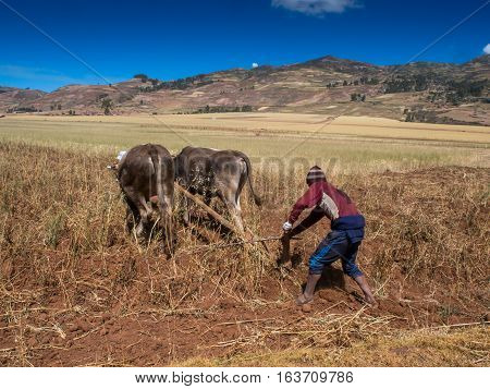 People With Oxen