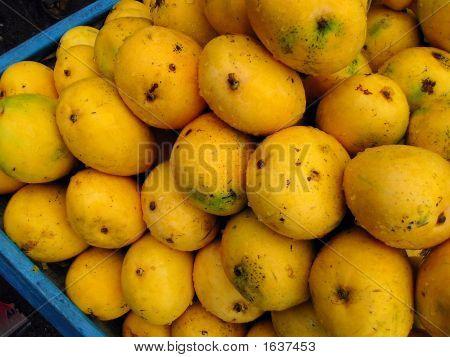 Mangoes -  Mangifera Indica