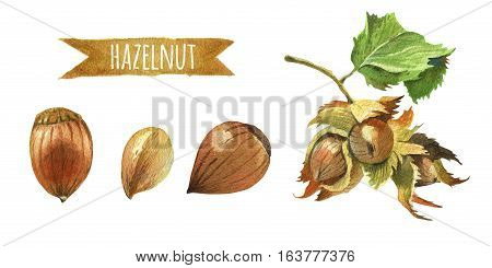 Hazelnuts, hand-painted watercolor set, clipping paths included
