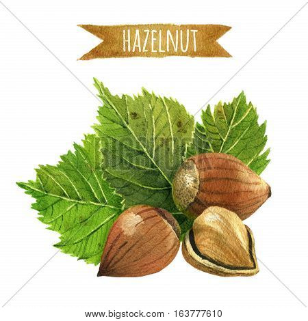 Three Hazelnuts with green leaves, hand-painted watercolor illustration
