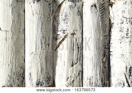 Wood Log Background White Colored Wooden Planks with Bark Textured Timber Wall