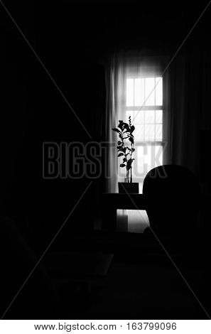Black and white silhouette of back lighted plant, with light coming through window into a room.