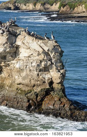 Herd Of Birds On Natural Brides Rock