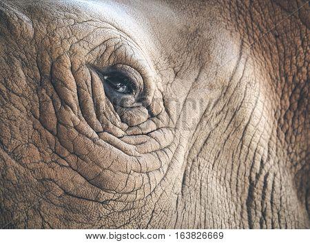 Eye of the rhino/ Selective focus on the eye