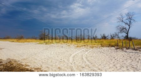 Sand and grass steppe on a background of a stormy sky. Coast Kinburn Spit. Ukraine