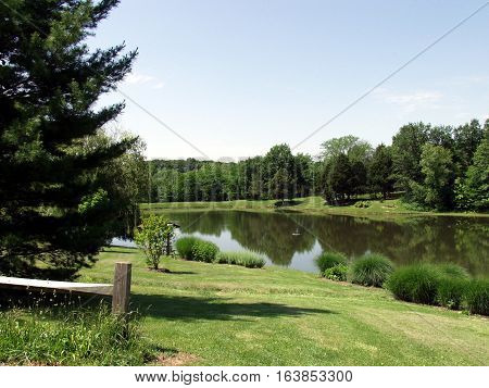 reflection of trees in pond in the summer