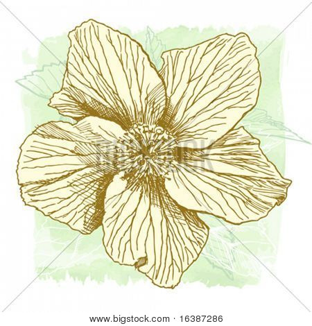 Hibiscus flower - vector hand draw