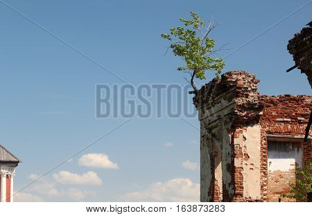 Small tree grew on the ruins of an ancient building with brick walls