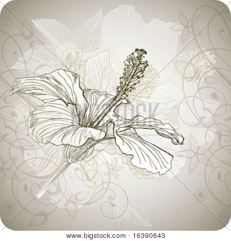 Hibiscus flower - vector hand draw  paint. Elements on separate layers