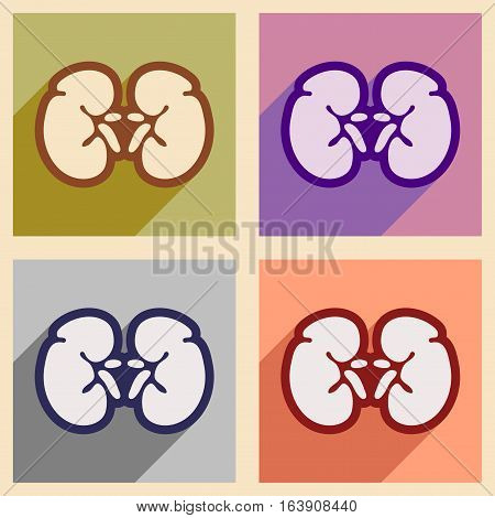 Icons of assembly human kidney in flat style
