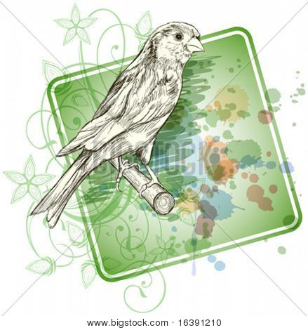 Sketch of a canary bird sitting on a branch & floral calligraphy ornament - a stylized orchid,  color paint background