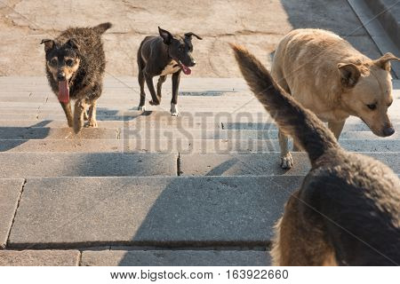 A Pack Of Stray Dogs In The City