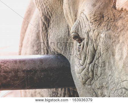 Eye of the rhino/ Selective focus on the eye with place your text
