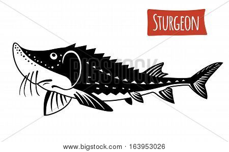 Sturgeon, black and white  vector illustration, cartoon style