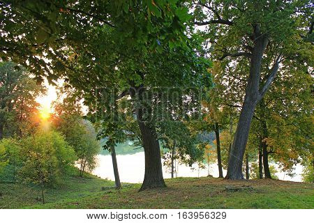 beautiful landscape with sunset in the park park with big green trees and lake